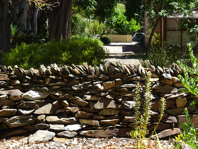 Free Stone Wall in the Suburbs
