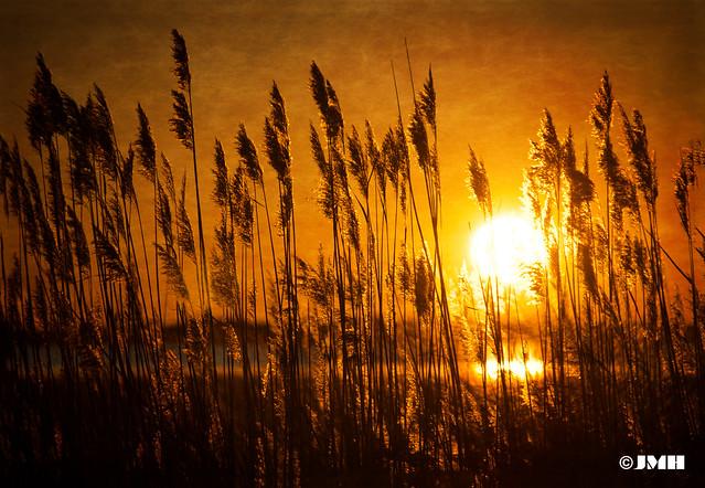 Up against the sun....HSS!!!