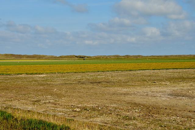 210423 Texel - 01 Midden-Eierland 1007
