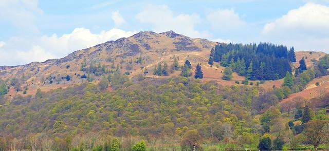 Frith Wood on Grange Fell from Rosthwaite.