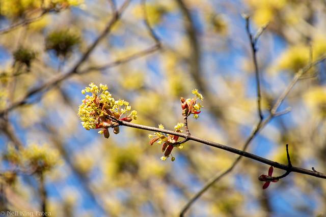 Week 17 - Blooming Spring