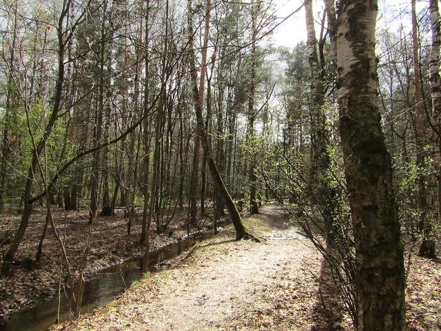 in Kuskovo ( Kuskovsky creek )