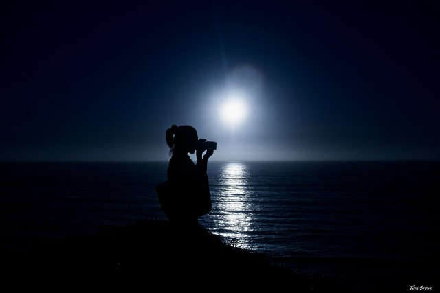 'Moonlight Silhouette'