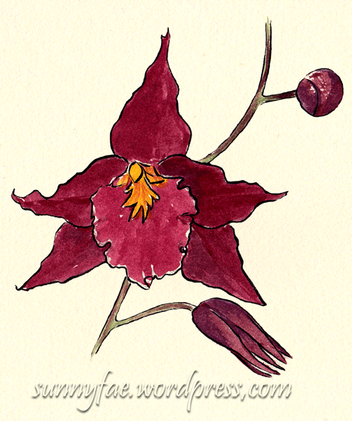 red orchid flower sketch