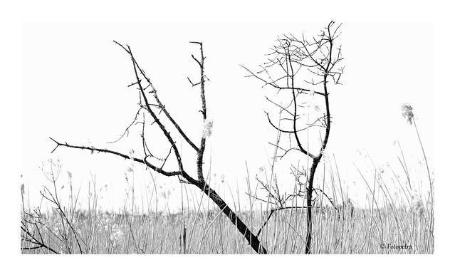Moor Landschaft