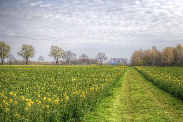 El camino a la primavera