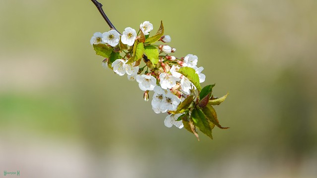 9666 - Spring