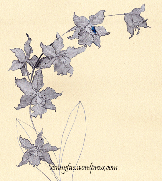 red orchid pencil sketch