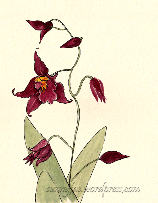 red orchid plant sketch 1