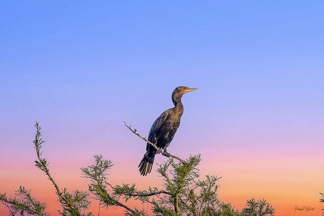 Glades Sunrise