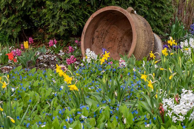Berlin, Gärten der Welt, Orientalischer Garten: Frühlingsbeet- Berlin, Gardens of the World, Oriental Garden: Spring flower bed