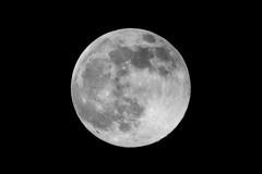 Lúa Rosa