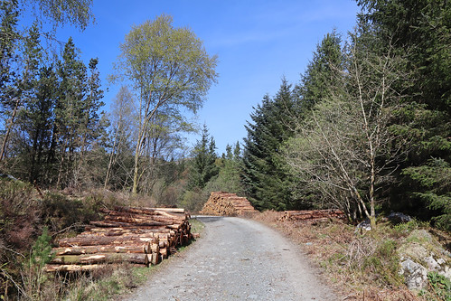 IMG_0620 logging copy