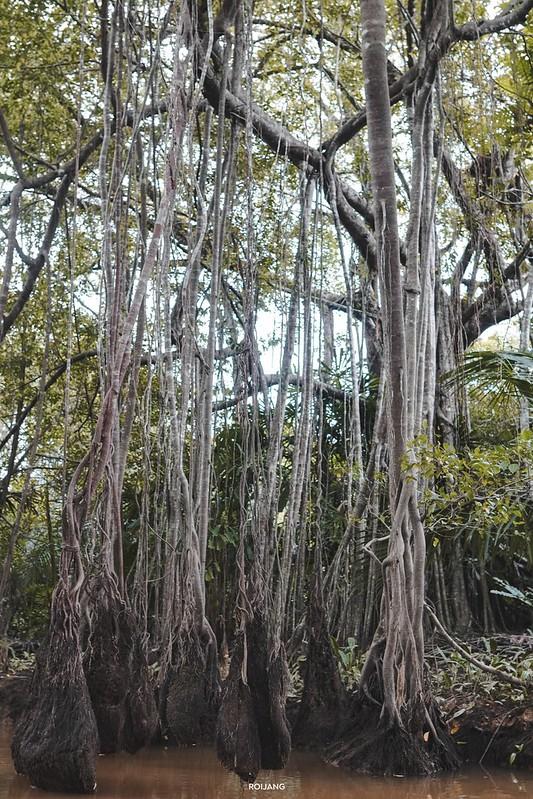 สวนสัตว์ตะกั่วป่า พังงา