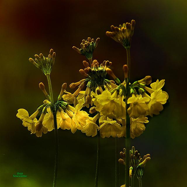 E236 Blumen, Flower
