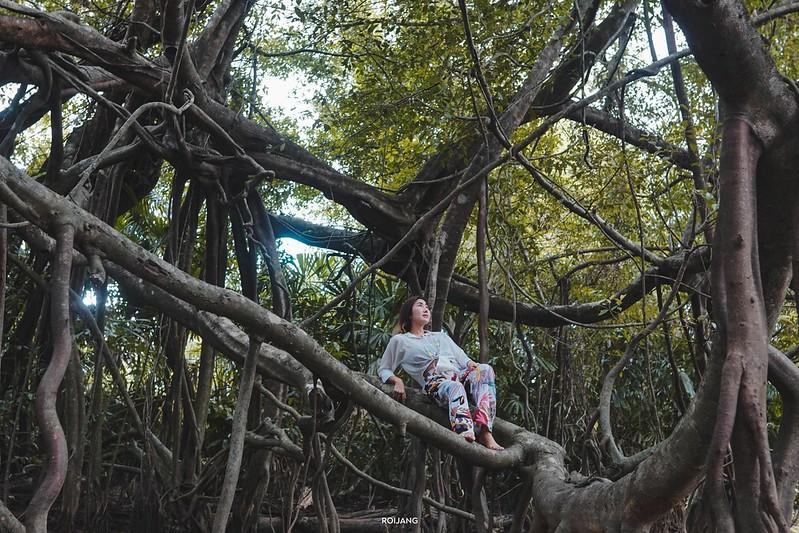 เที่ยว ธรรมชาติ ตะกั่วป่า พังงา