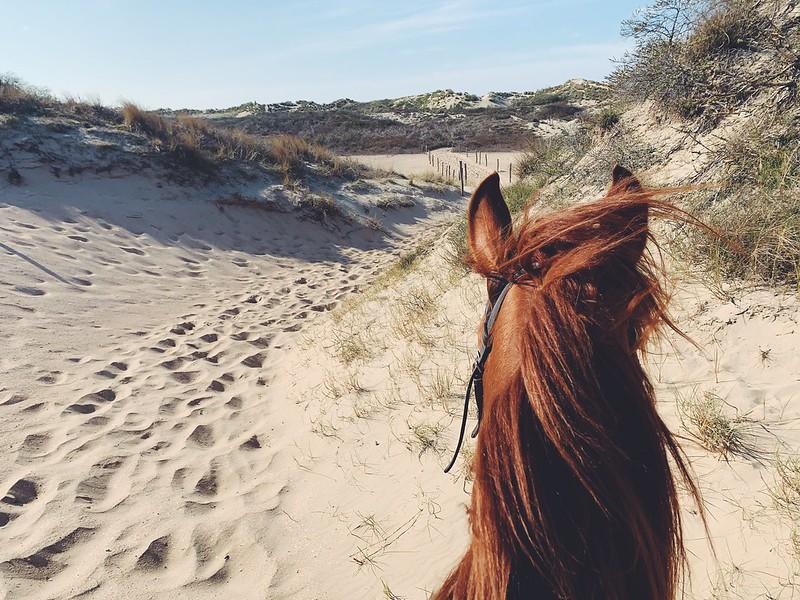 Ratsastus rannalla