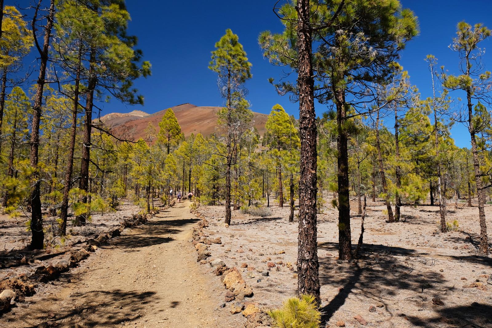 Corona Forestal Natural Park, Tenerife, Canary Islands, Spain