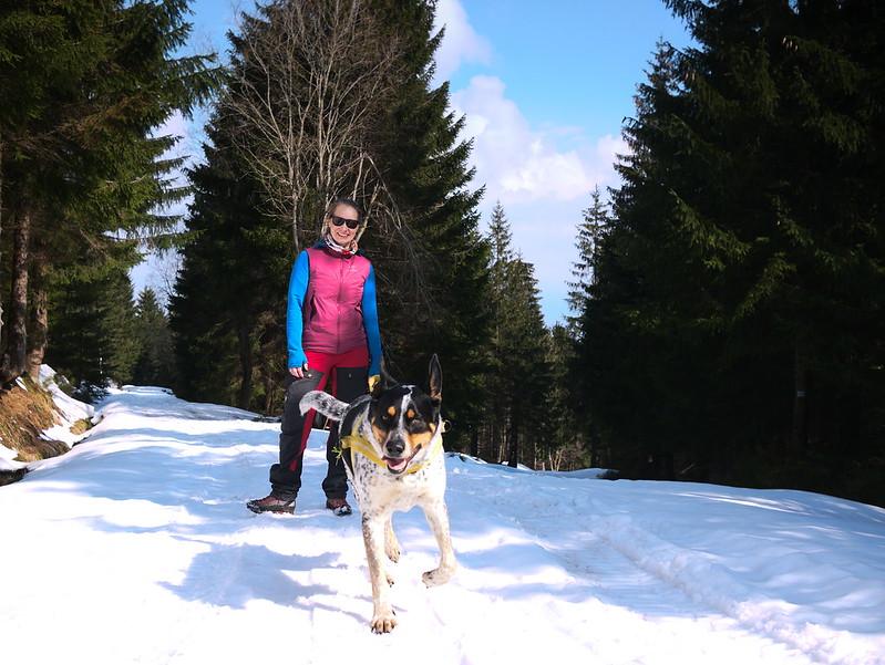 Radość na śniegu (psy lubią śnieg!)