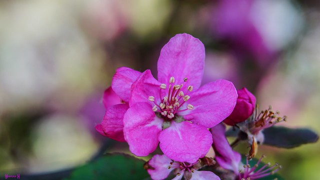 9670 - flower
