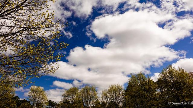A cloudy spring...  Un rajeunissement ?