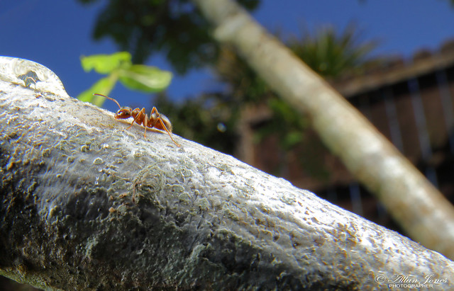 Ant on a tree