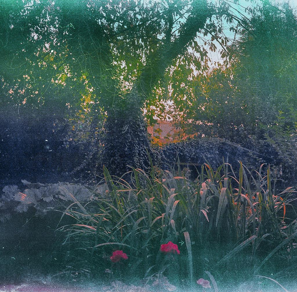 El jardi de l'heura / Ivy garden