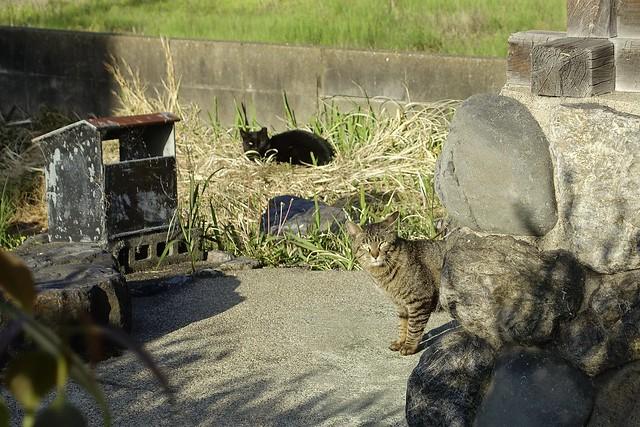 Today's Cat@2021−04−27