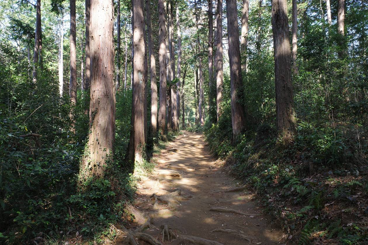 【奥武蔵】天覧山~多峯主山 桜満開!春の日帰り登山
