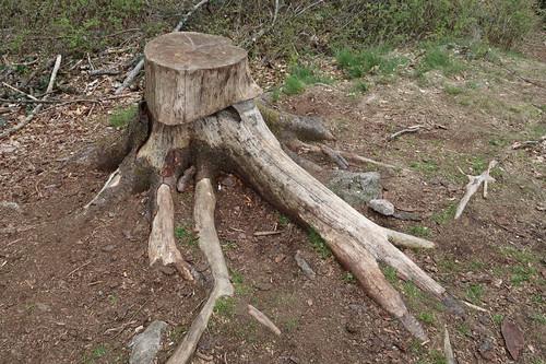 Als geeigneter Tisch für Rast identifizierter Baumstumpf (auf dem Kamm des Hüggels)