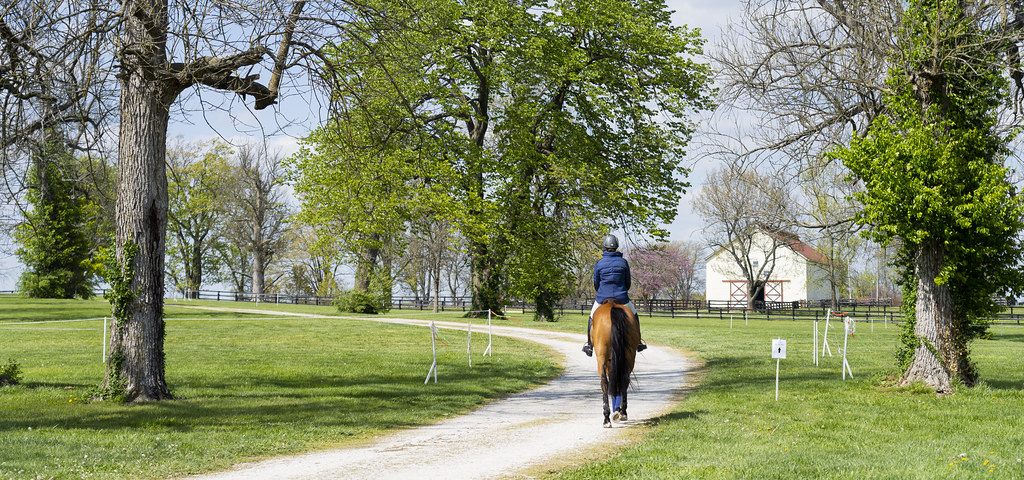 Afternoon Horse Park Walk
