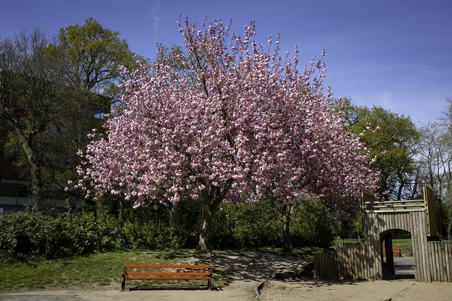 Week 17 seasons - Spring