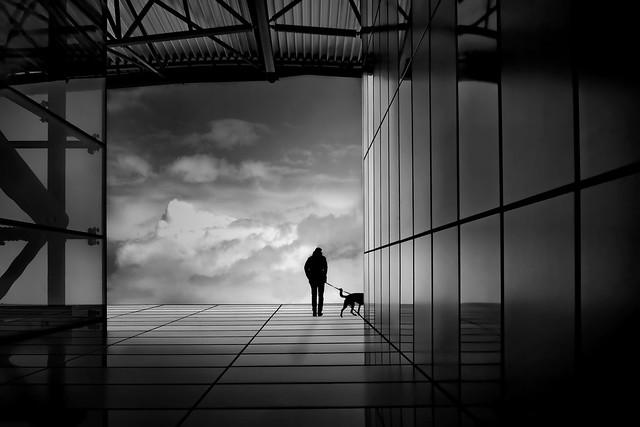 urban dog walk