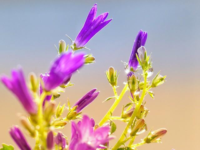 Spring flora II