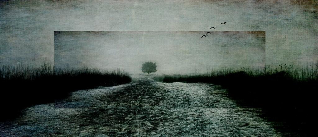 Lone Tree by Zoltan Puskas