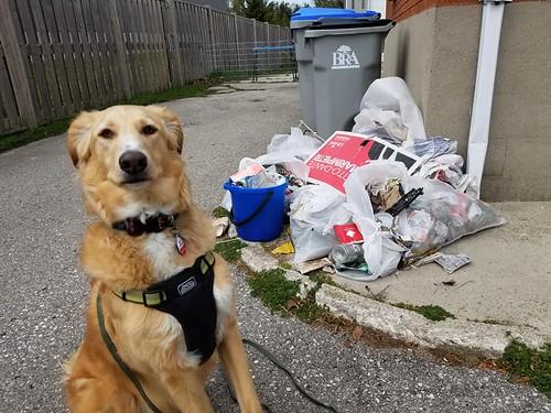 Dude's Trash
