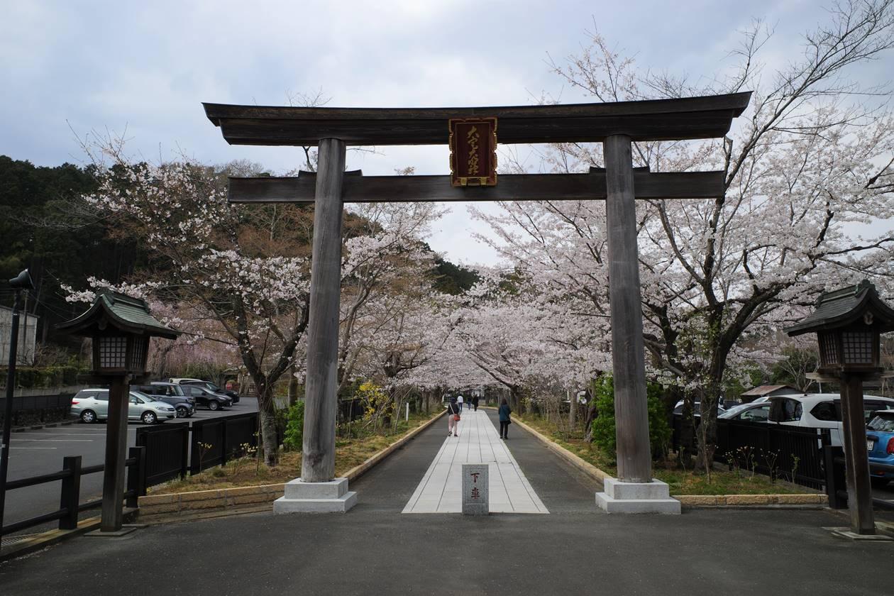 高麗神社の桜並木