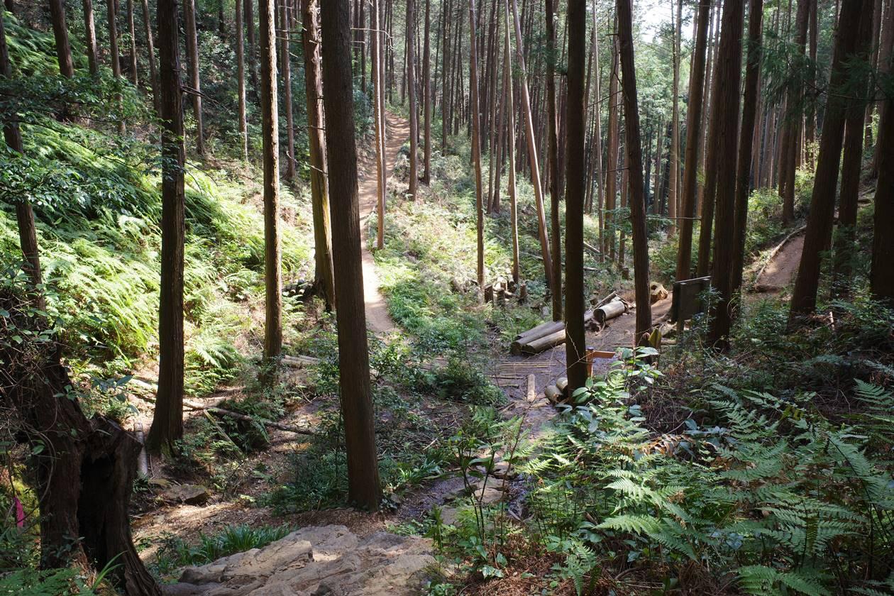 日和田山登山道
