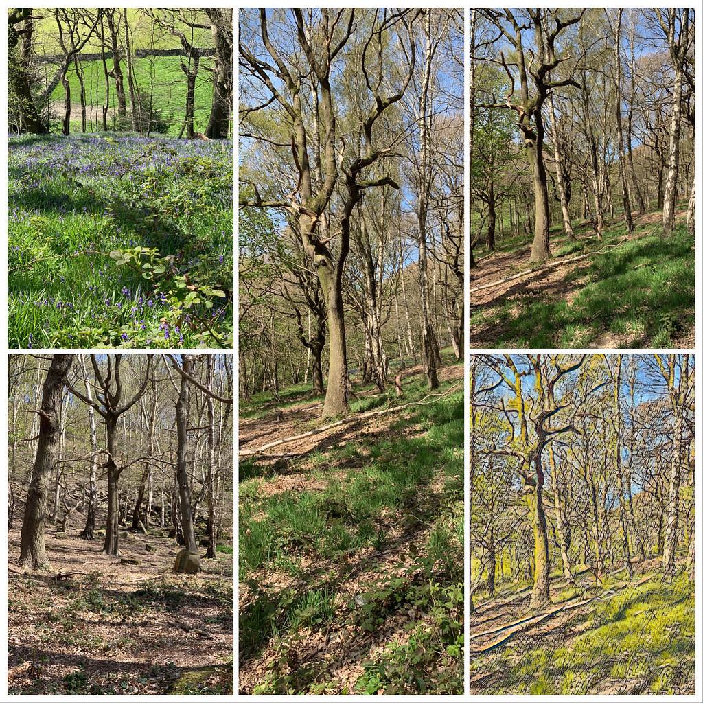 Cromwell Wood, Southowram