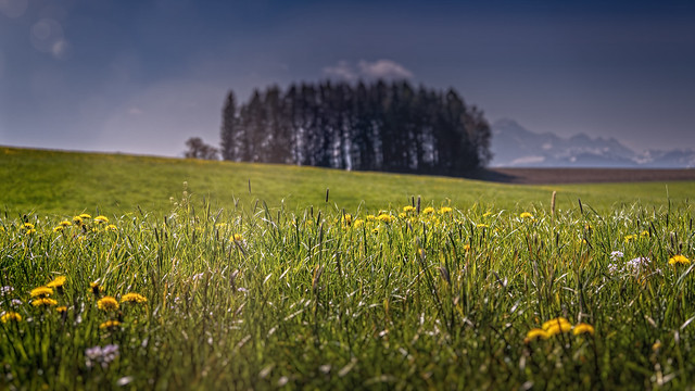 SPRING IS IN THE AIR - Switzerland