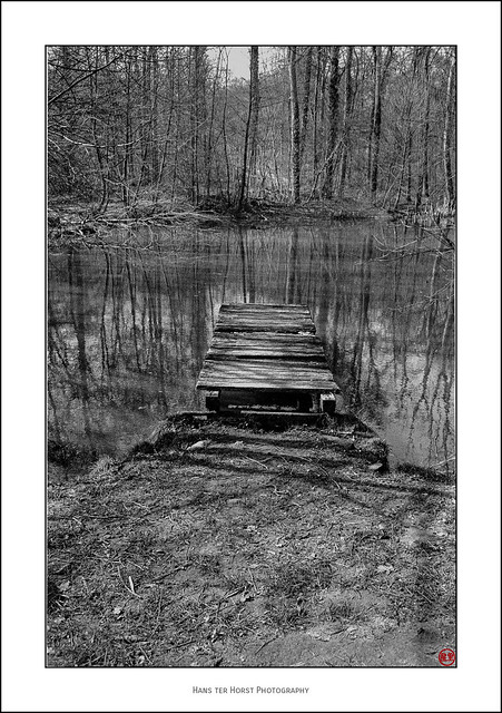 Jetty in the forest