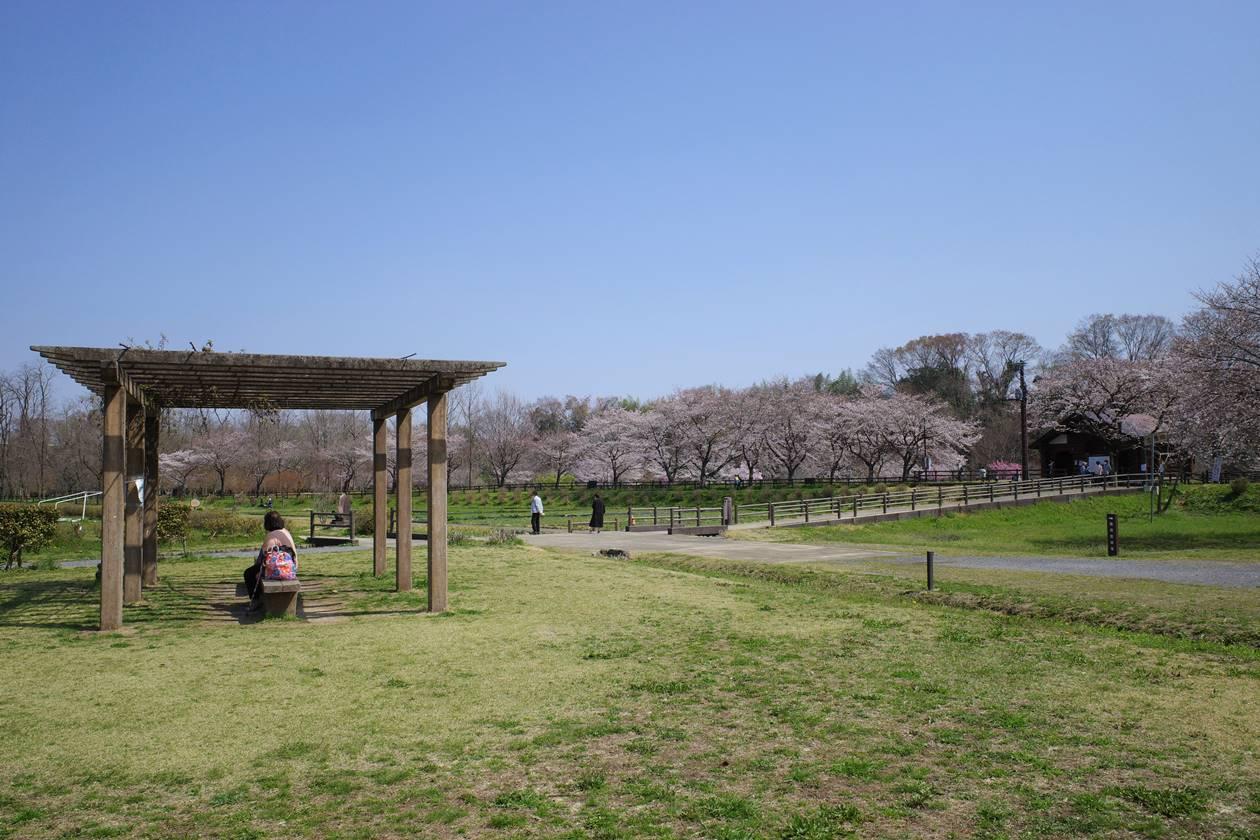 春の巾着田~日和田山ハイキング