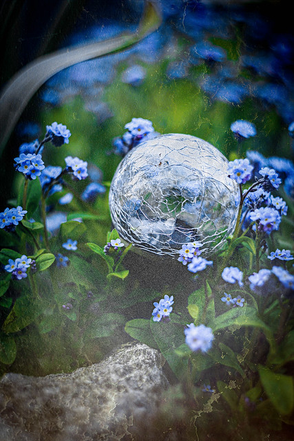 Forget-me-nots   #116