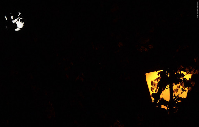 Lockdown... Midnight at  my window