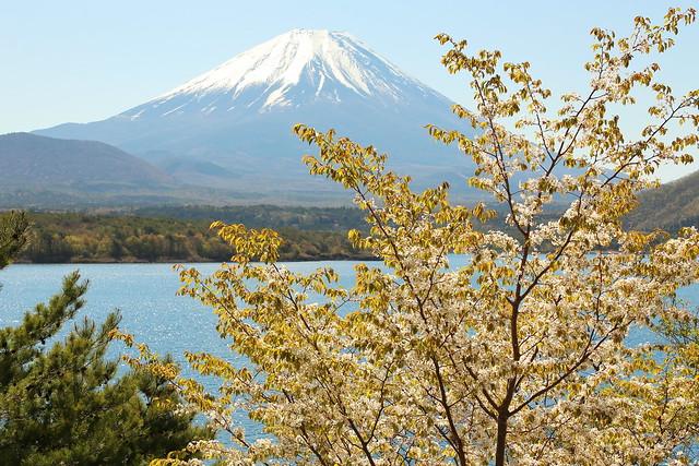 Mt. Fuji spring scenery