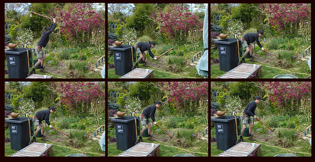 Removing the Miscanthus