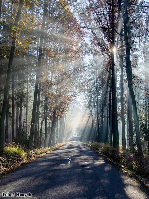 Sunbeams Shine Through Autumn Trees /  Sluneční paprsky prosvítající skrz podzimní stromy (Rousínov, Czechia)