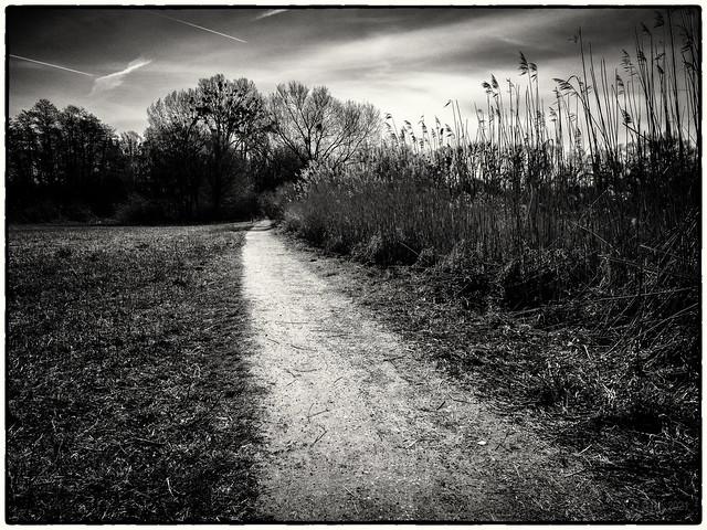In the Reedlands...