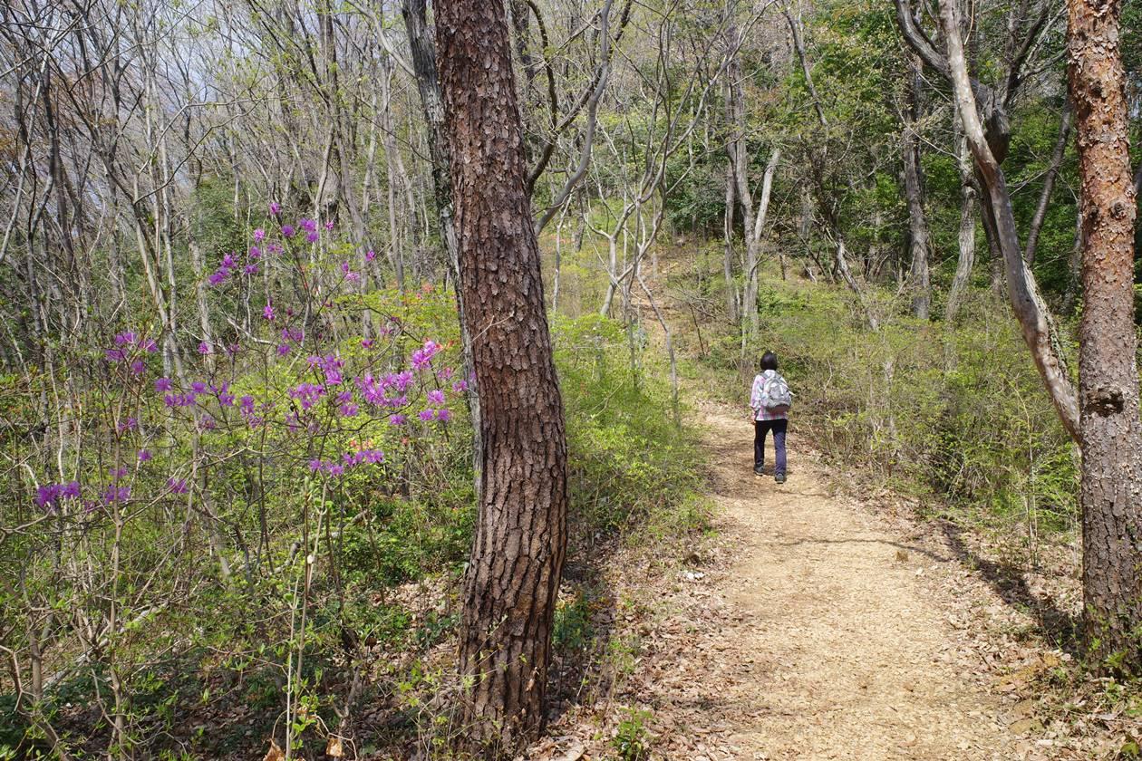 【奥武蔵】天覧山〜日和田山 桜とツツジ満開!春の日帰り登山