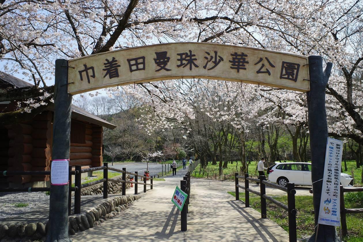 春の桜満開の曼珠沙華公園